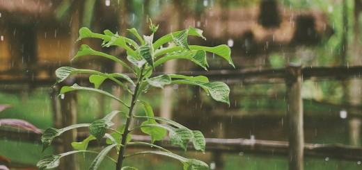 poem about rain