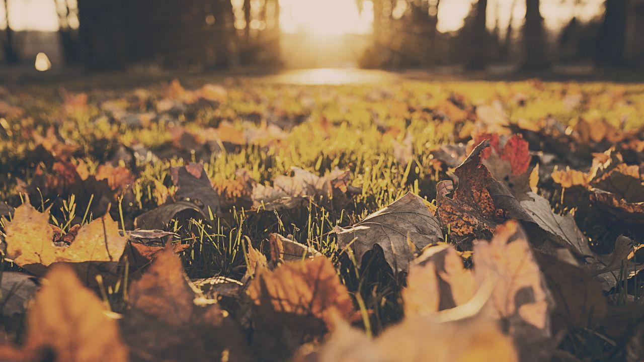 Haibun Poetry, Spring Party, Autumn Post