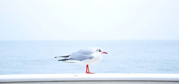 Seagull on the Ledge of the Ocean