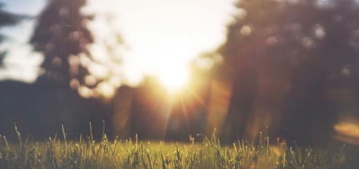 Sun in the Park