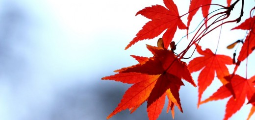 Contemporary Haibun, Red Leaves