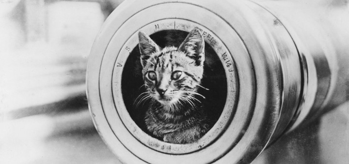 Cat in a Barrel, poem about the fragility of life