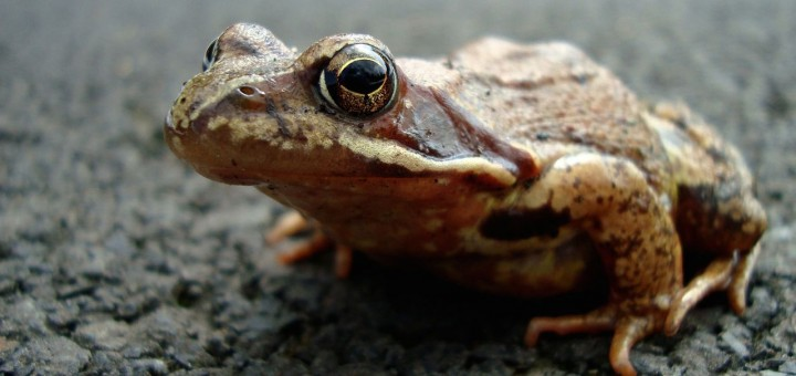 Frog, short stories about holding grudges
