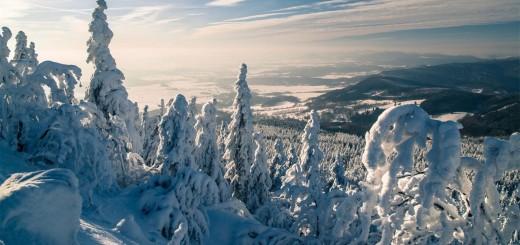 Snow Pines, Prose Poetry