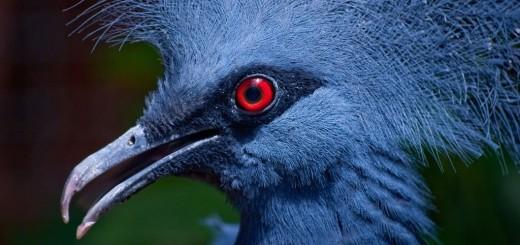 Blue Bird, short story about deception