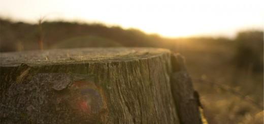 Tree Stump, Poetry Prose