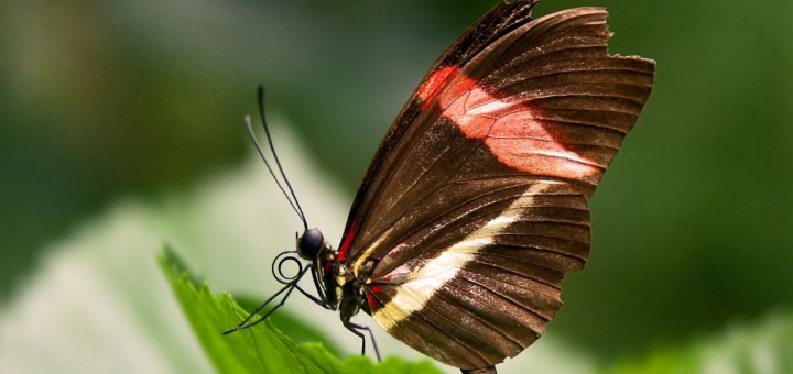 Short Family Stories, Butterfly