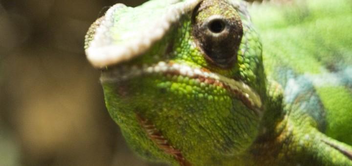 short story about lizard