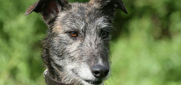A Dog Named Tycho