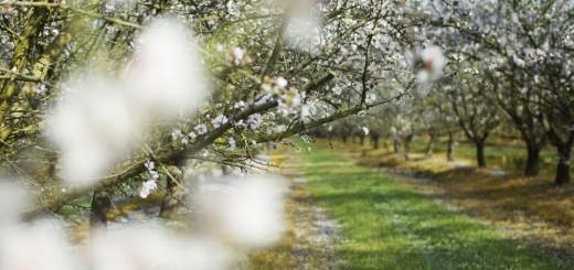 spring haibun