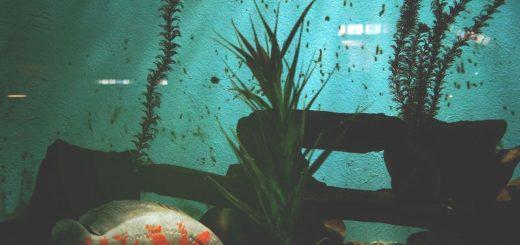 short story about catfish