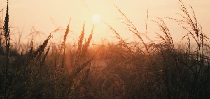 sunrise haibun