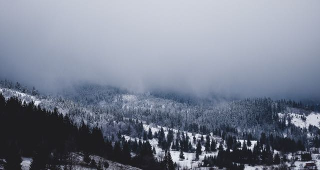 mountain with pine trees covered in snow