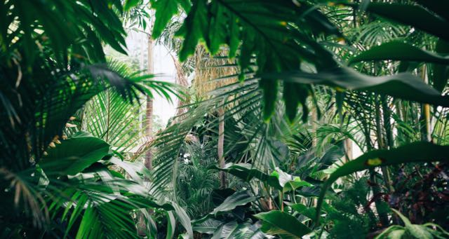 thick tropical vegetation jungle