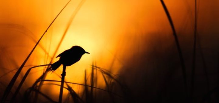 a bird sitting on blade of grass