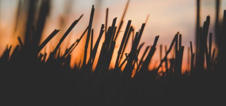 close up of grass at sundown