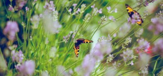 two butterflies in the tall grass and flowers