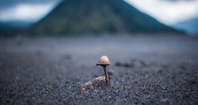 mushroom growing in an empty field