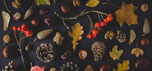 an arrangement of pine cones, dry leaves and branches