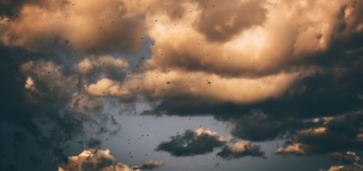 white and dark clouds with birds