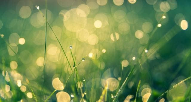 grass with dew in the morning sun