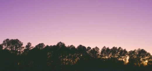 purple dawn over a tree line with a house